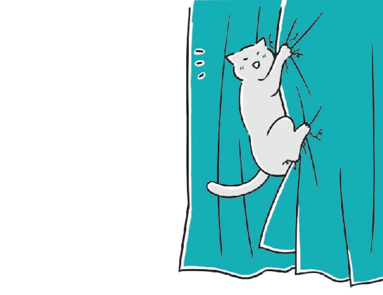 고양이 블라인드