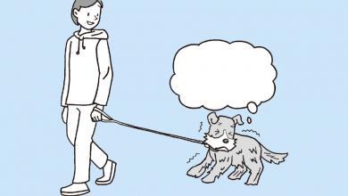 강아지 앞발