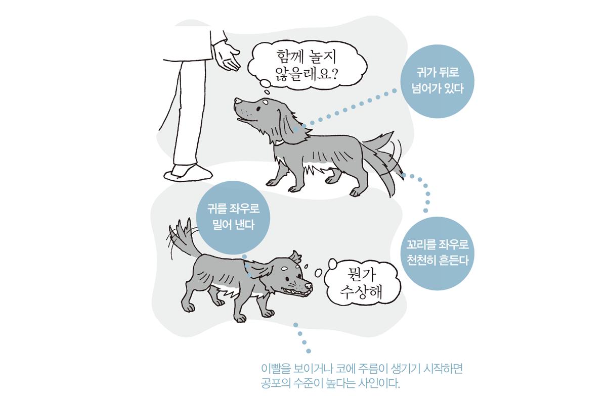 강아지 귀