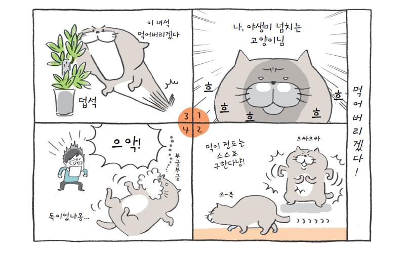 고양이에게 위험한 식물