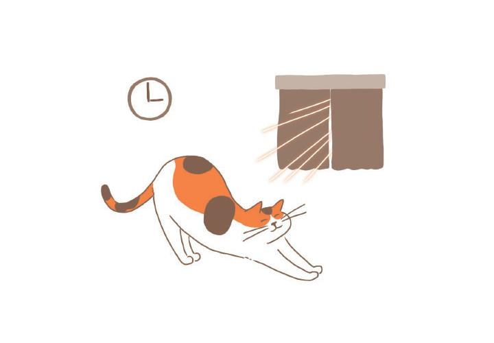 고양이 생활