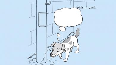 강아지 오줌