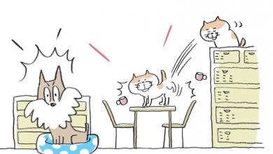 강아지와 고양이