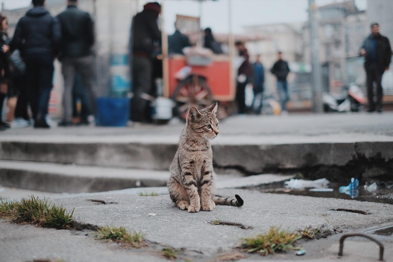 고양이 산책