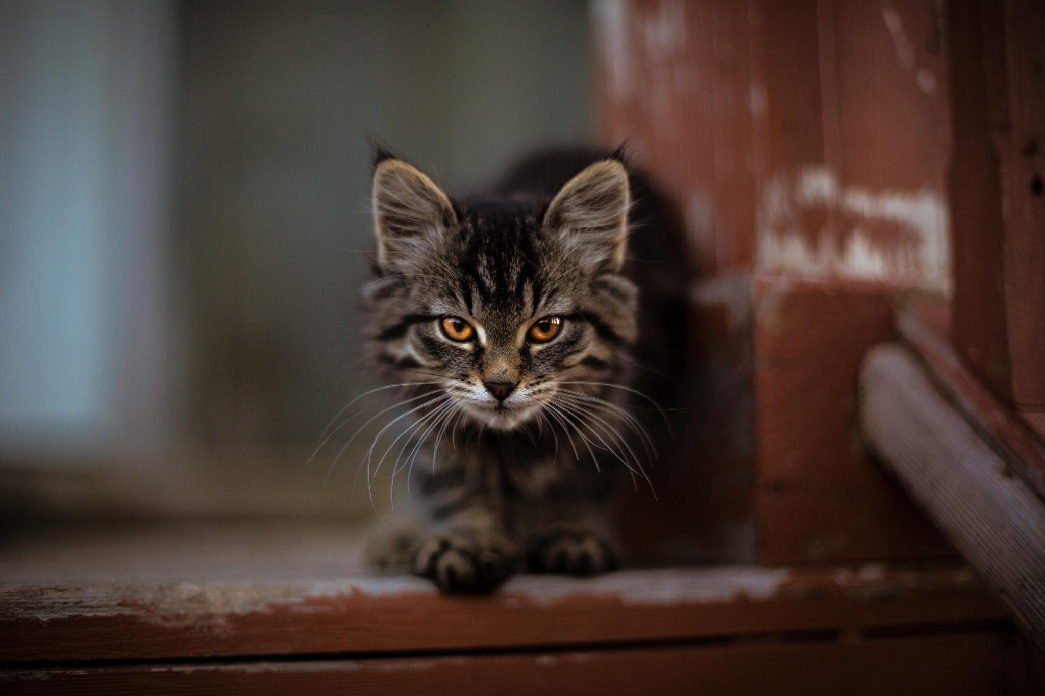 고양이 외출