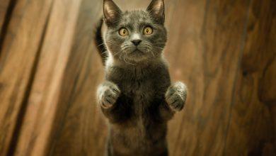 고양이가 사람처럼 두 발
