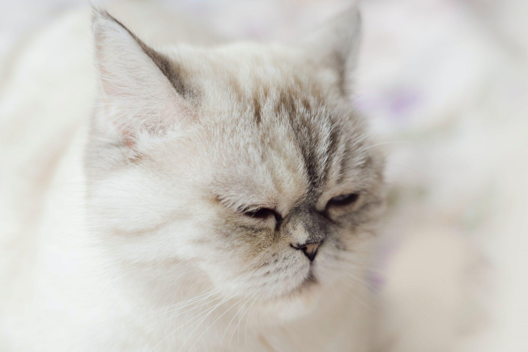 고양이 울음소리