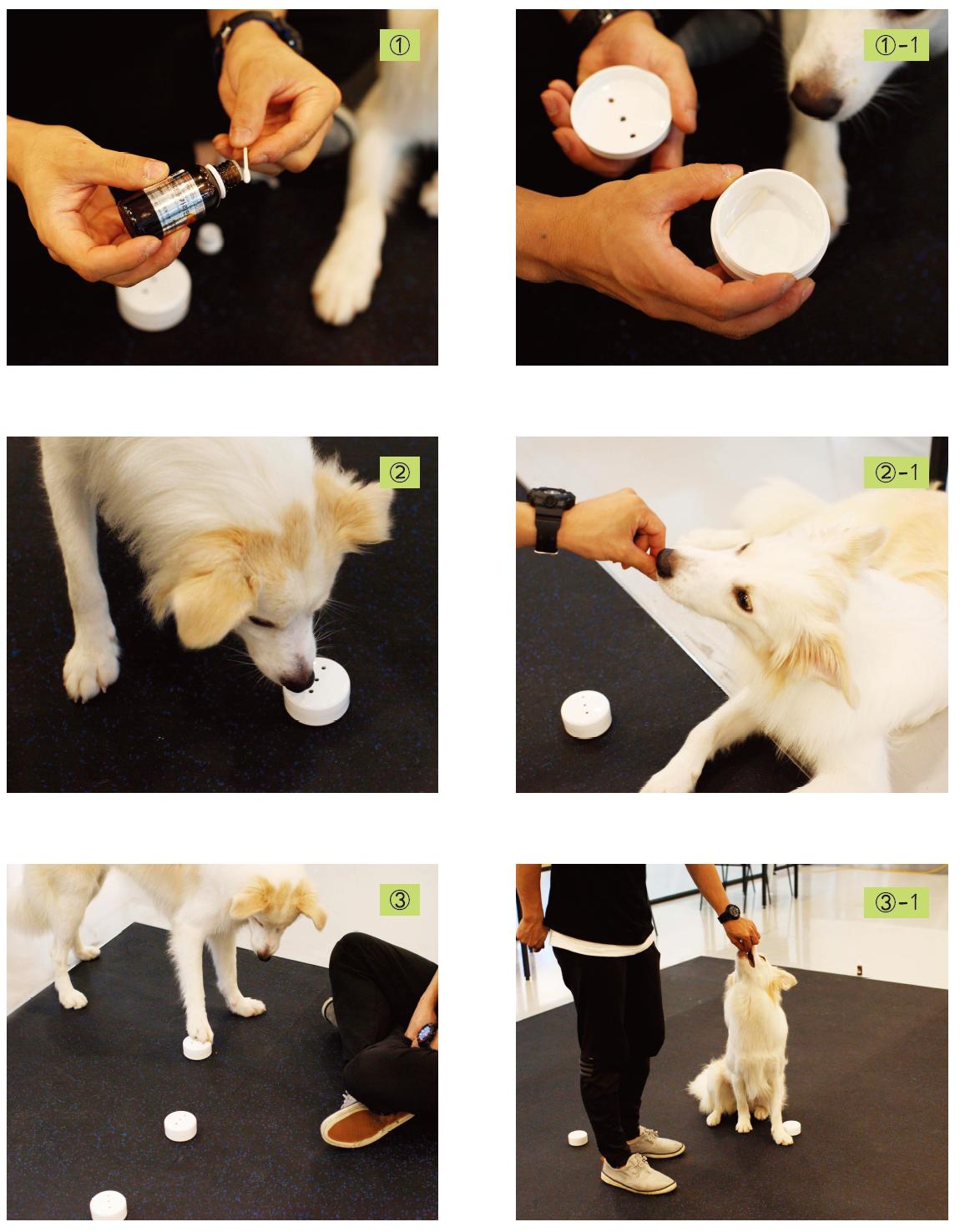 강아지 노즈워크 장난감