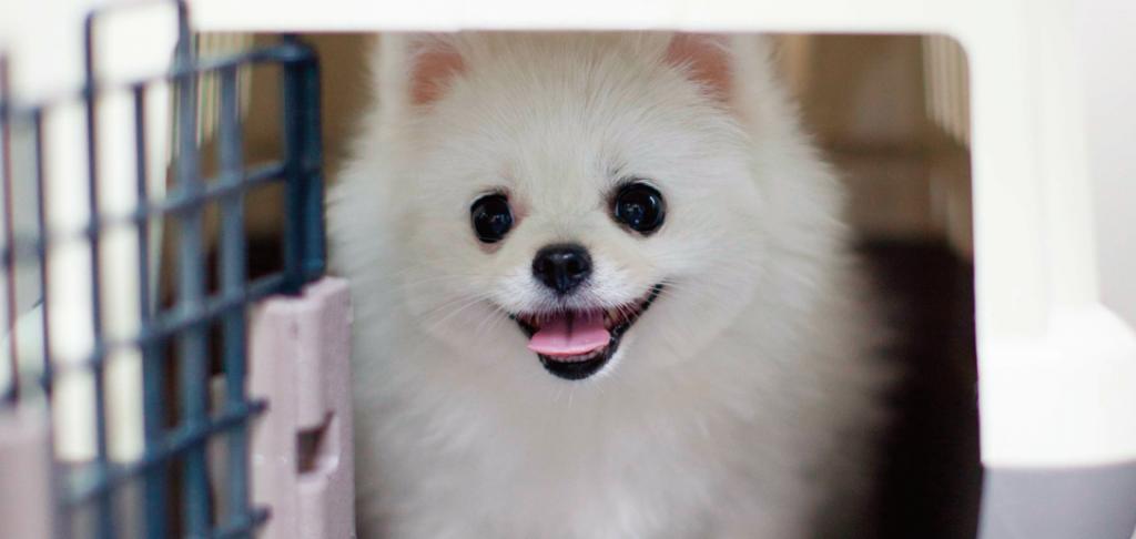 강아지 켄넬