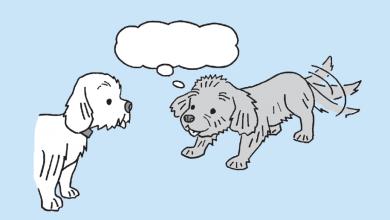 강아지가 놀고