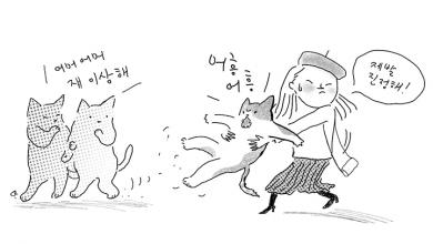 고양이가 공격