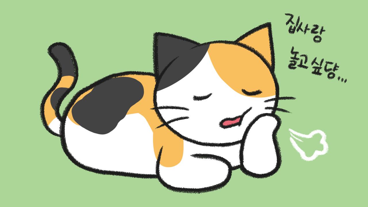 고양이가 심심할