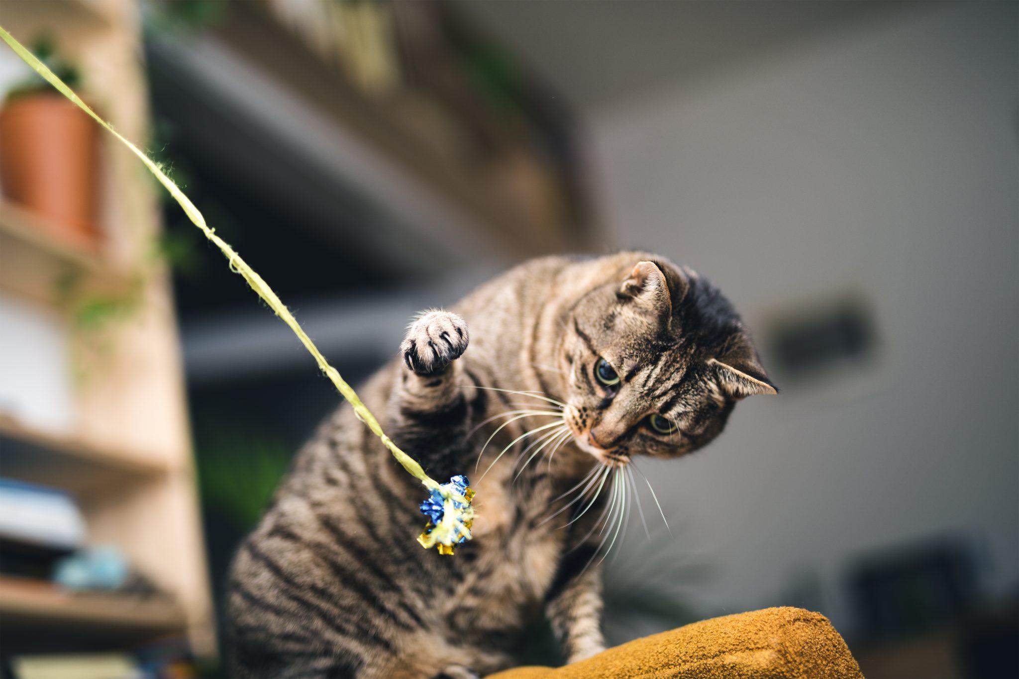 고양이 수명