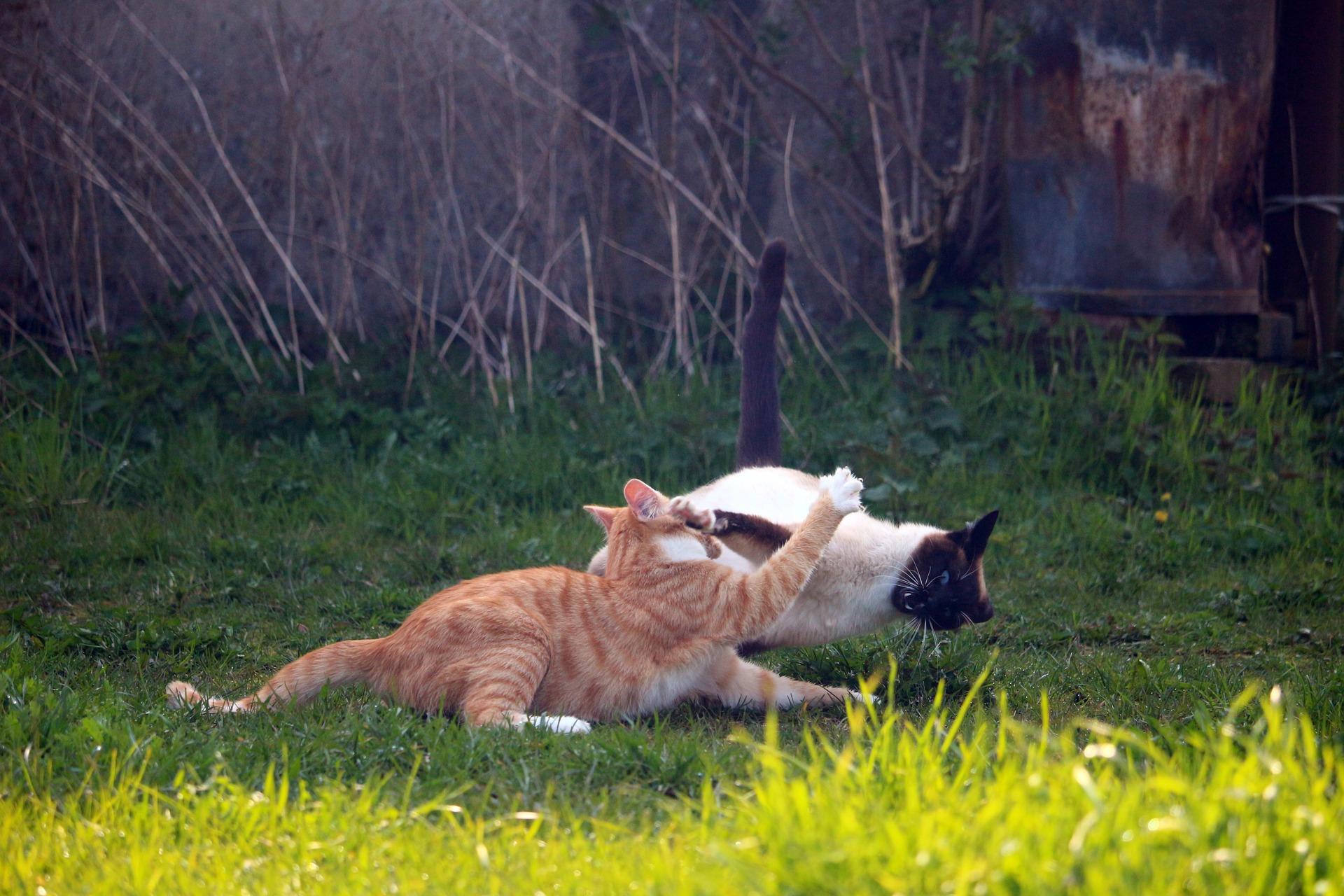 고양이 목덜미