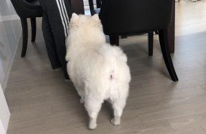 강아지 방귀