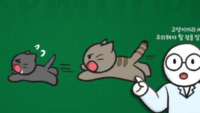 고양이가 다른 고양이를