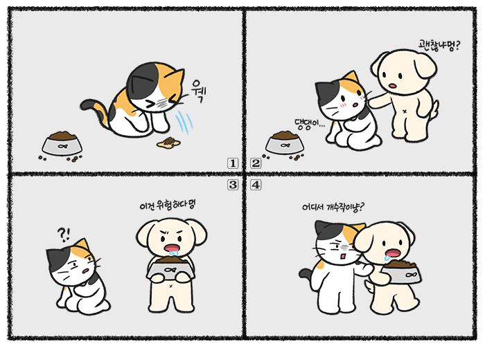 고양이 사료