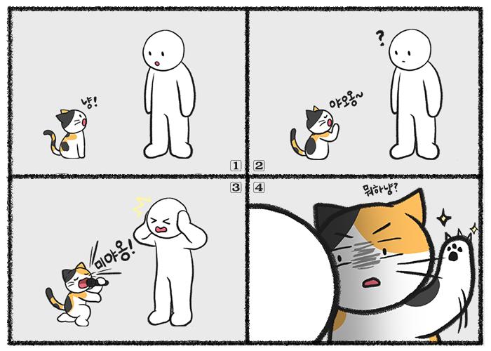 고양이가 밤마다