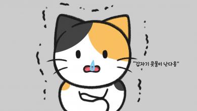 고양이 허피스