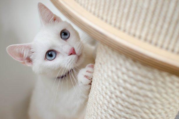 고양이 스크래처