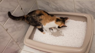 고양이 두부 모래