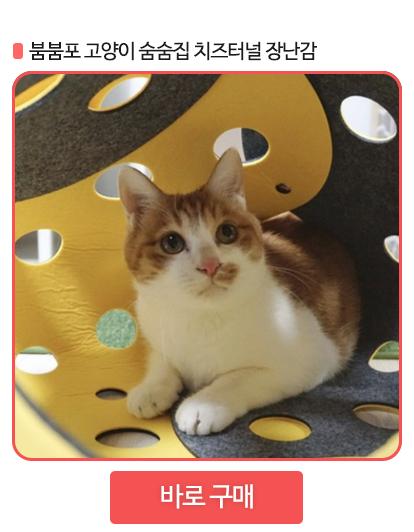 고양이 터널