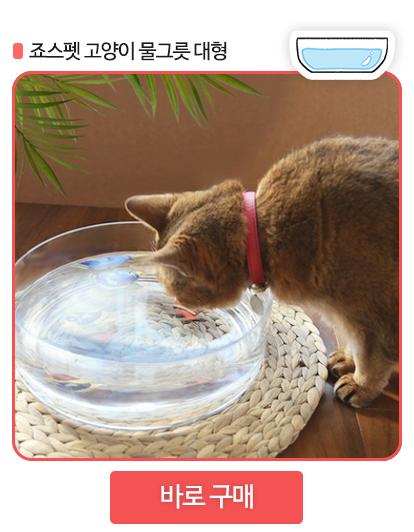 고양이 물그릇