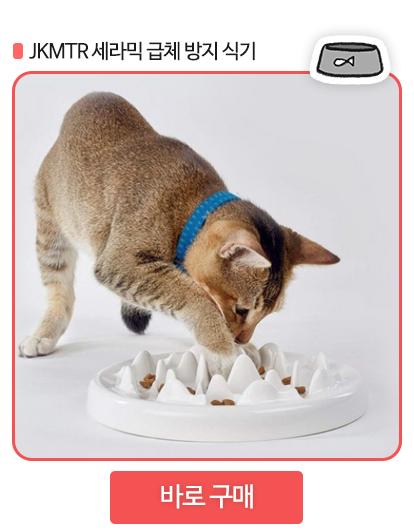 고양이 밥그릇