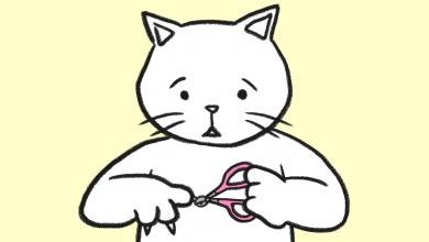 고양이 발톱 자르기