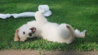 강아지 진드기 증상