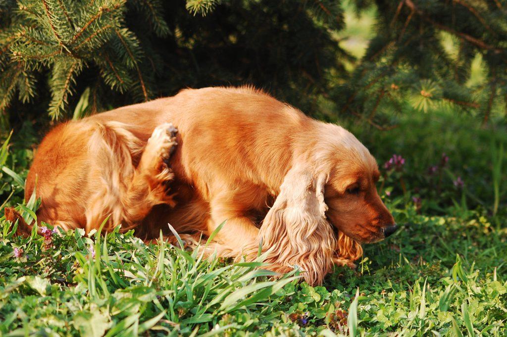 강아지 땅콩