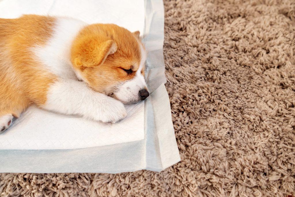 강아지 배변패드