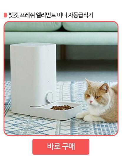 고양이 자동급식기