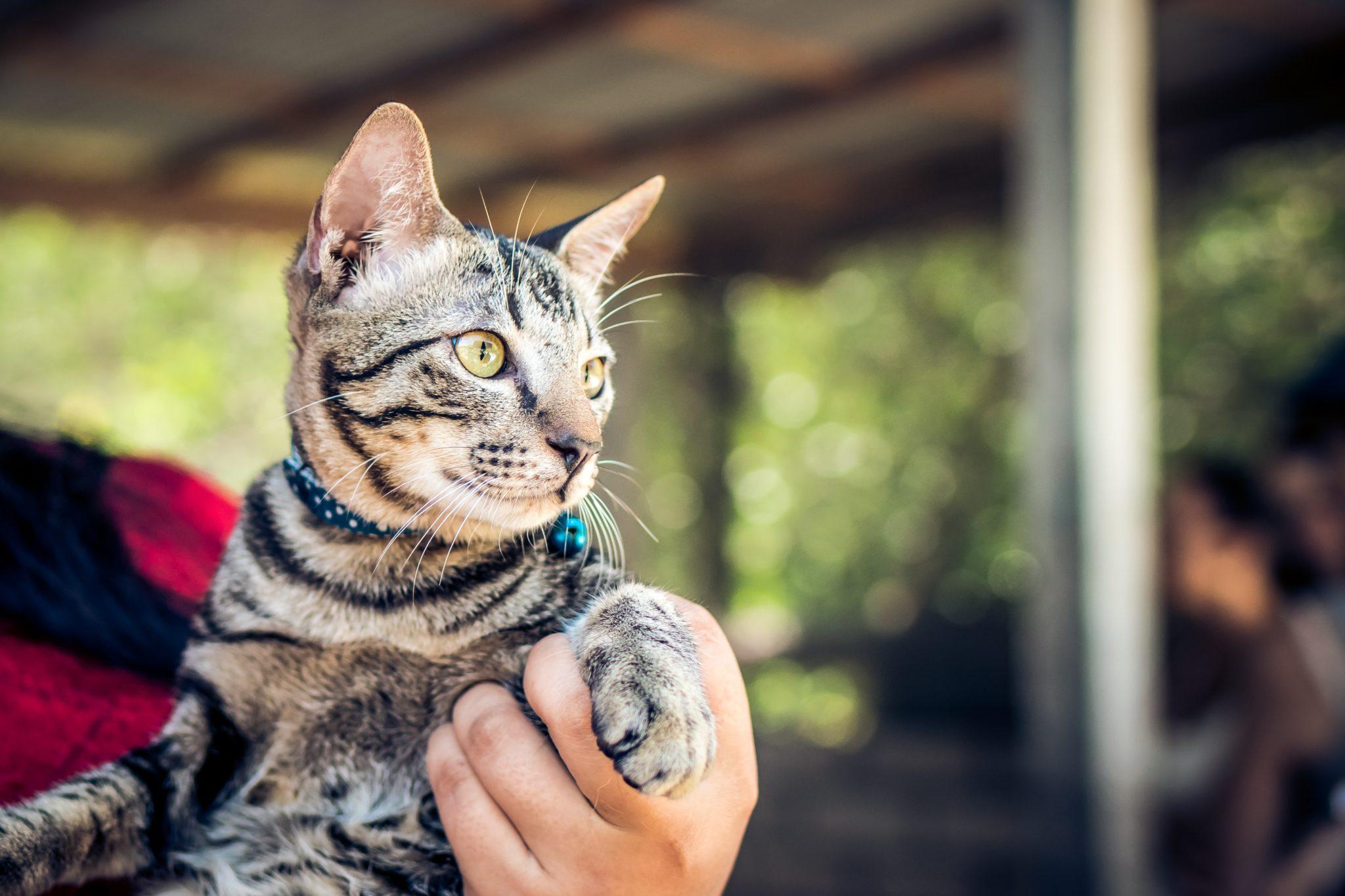 고양이 목걸이