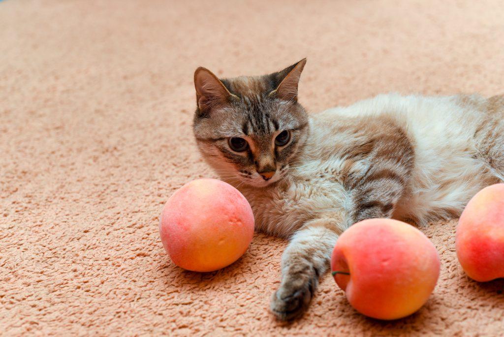 고양이 여름철 과일