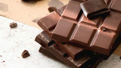 강아지 초콜릿