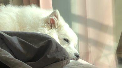 강아지 잠자는 모습