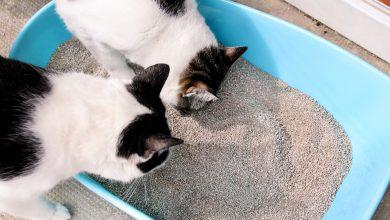 고양이 모래