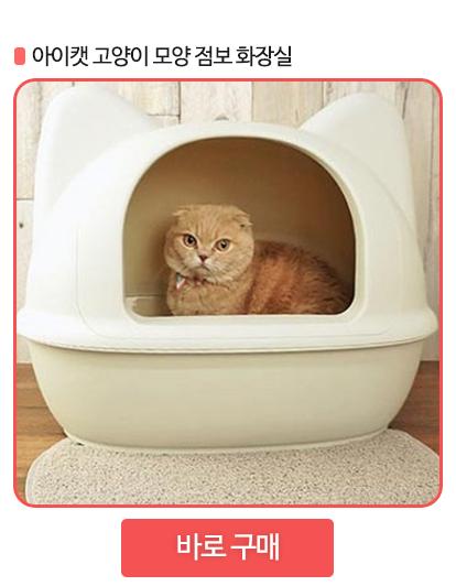 고양이 화장실