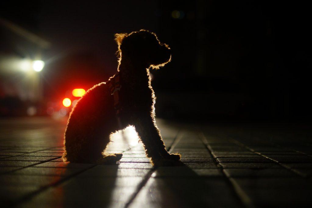 강아지 색맹