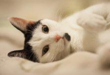 고양이 귀 세정제