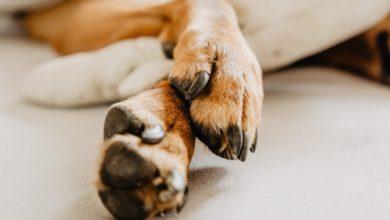 강아지 발톱깎이