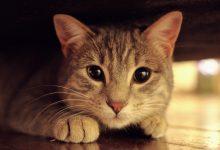 고양이 이사
