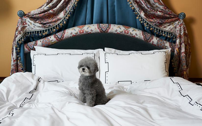 강아지 동반 호텔