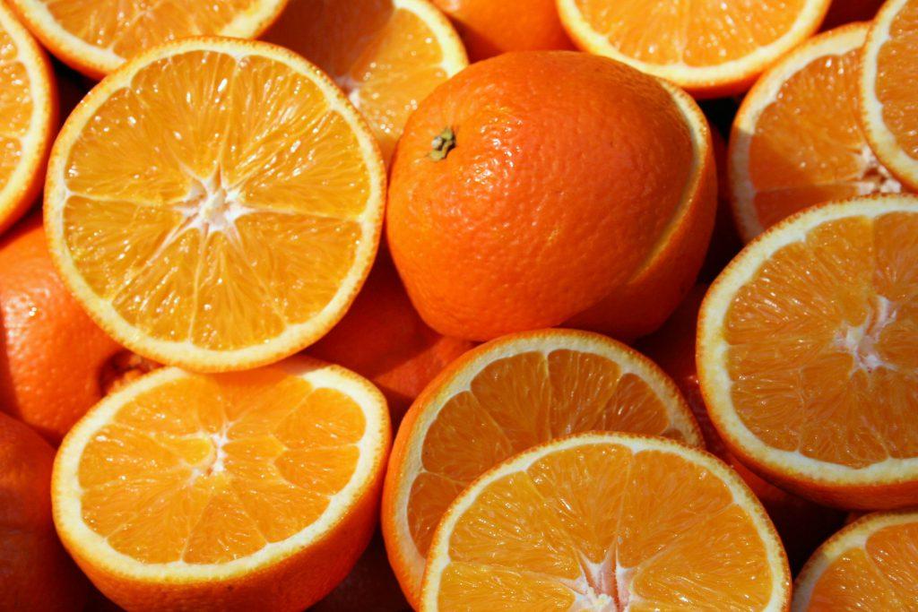 강아지 오렌지