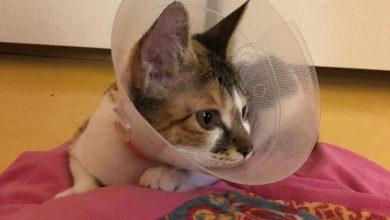 고양이 넥카라