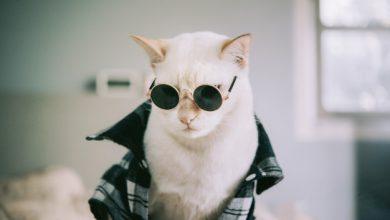 고양이 옷