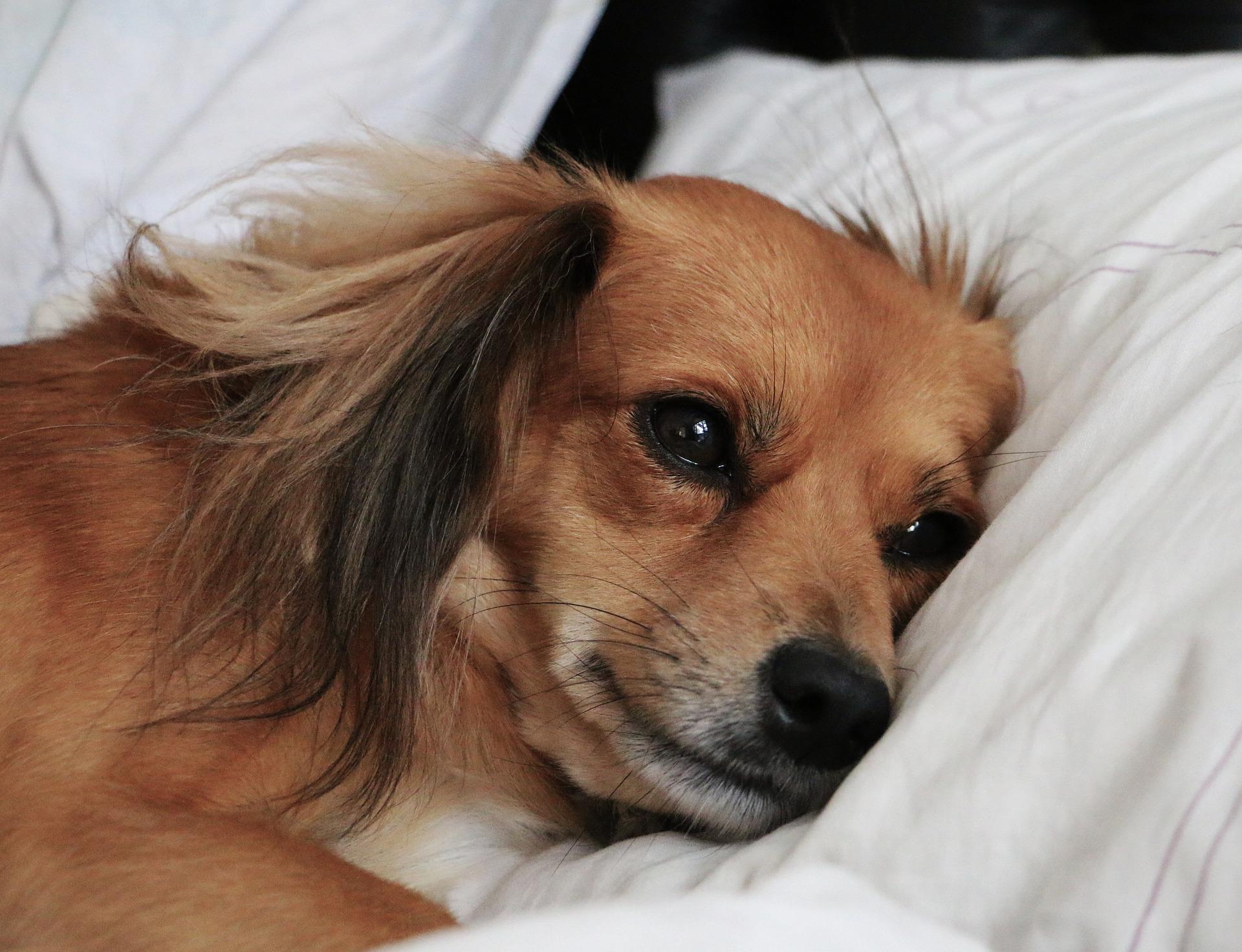 강아지 분리불안 해결 방법 알아보기