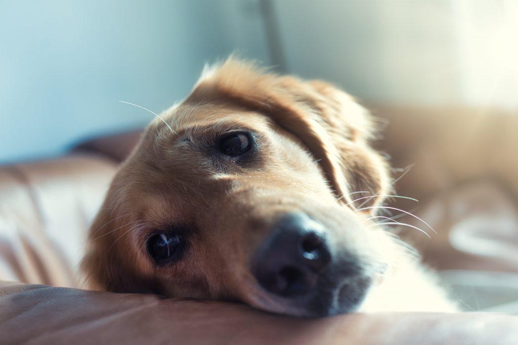강아지 분리불안 해결