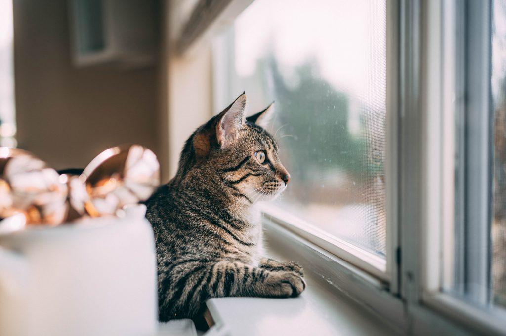 고양이 호텔